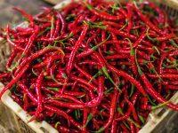 culinairy adventures pepper